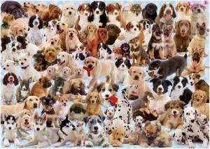 Как выбрать собаку?