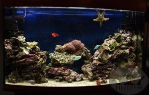 Восхитительный аквариум с чудесным оформлением