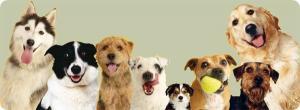 фото всех собак
