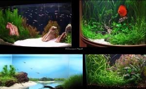 Обслуживание, оформление и перевозка аквариумов