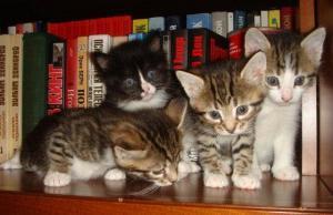 Наши любимые коты и кошки