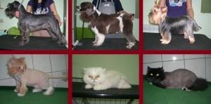 Лучшие стрижки для собак и кошек