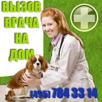 вызвать ветеринара на дом