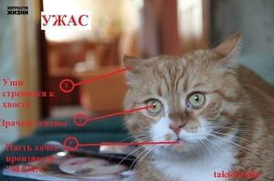 О чём говорит кошка (1)