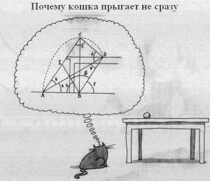 Траектория прыжка или о чём думает кошка