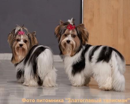 Корм Royal Canin ǀ Корм для собак Роял Канин ǀ Низкая цена