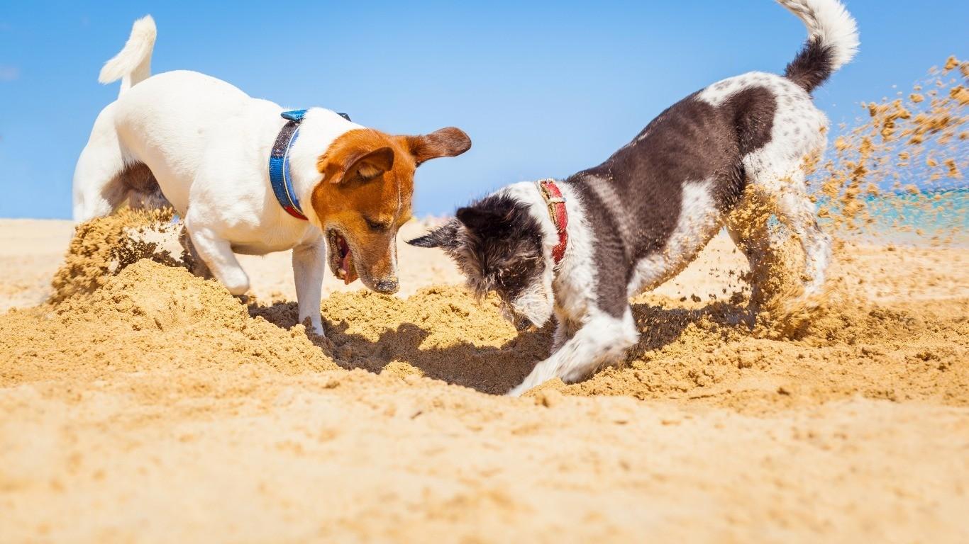 Активная порода собак
