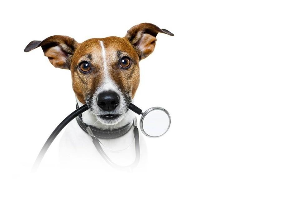 Ветеринарный контроль