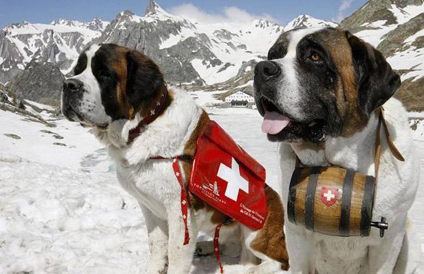 супрастин собаке от аллергии