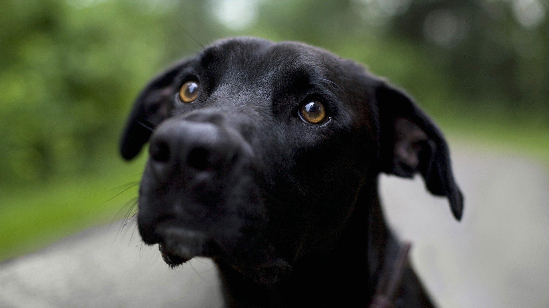 Аппатия у собаки