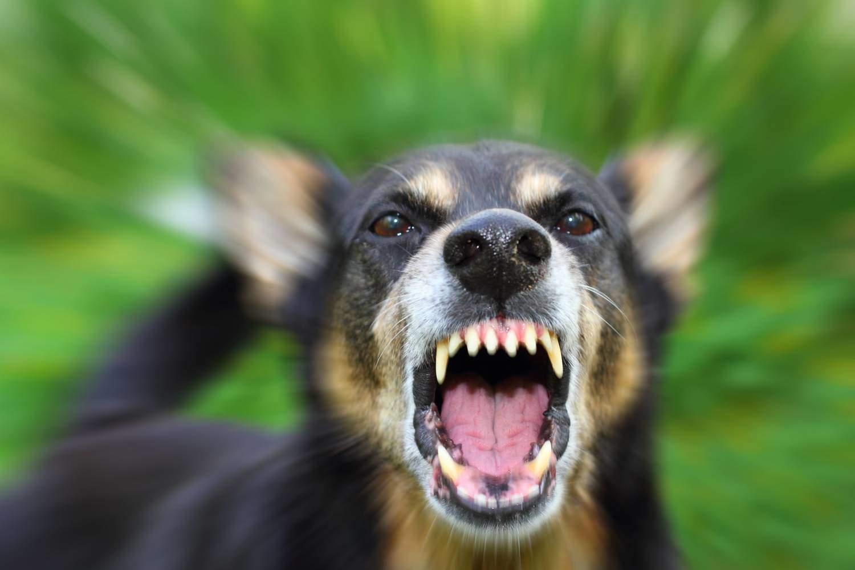 Сонник укусила своя собака за руку