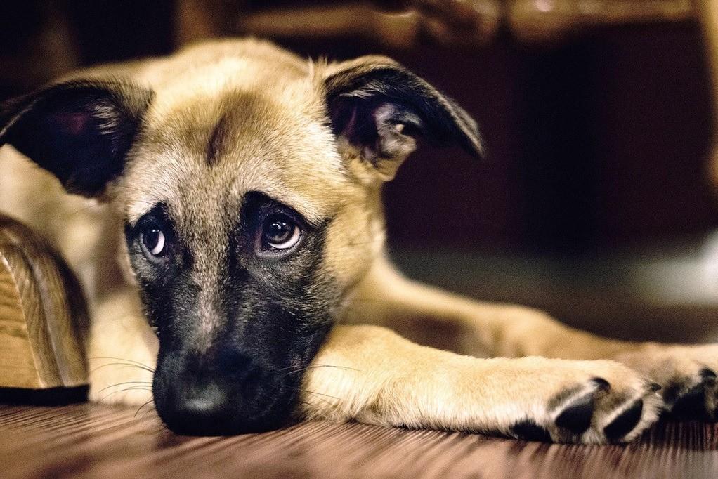 Грибок у собаки