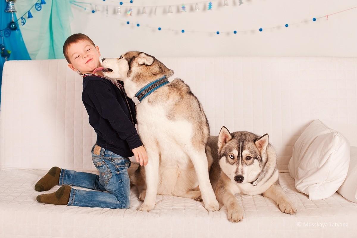 Сибирский хаски – фото собаки, описание характера сибирского хаски и характеристика породы