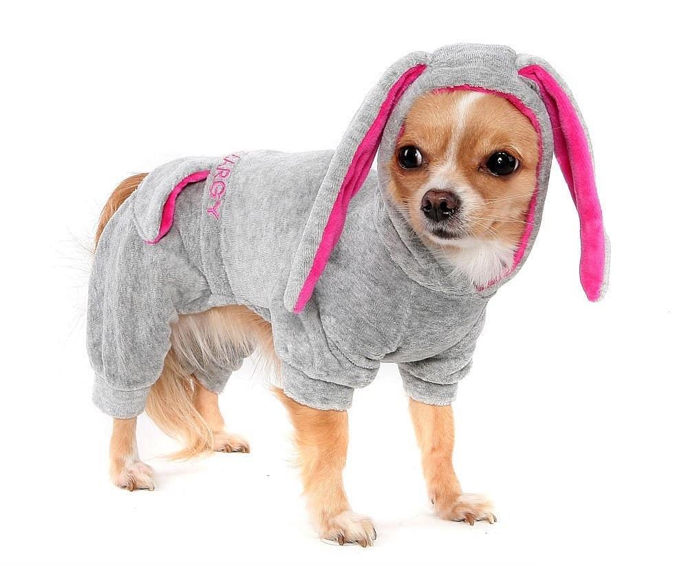 Одежда для декоративных собак