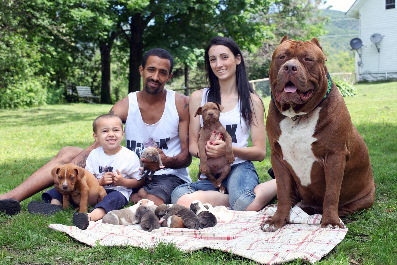 Питбуль с семьей