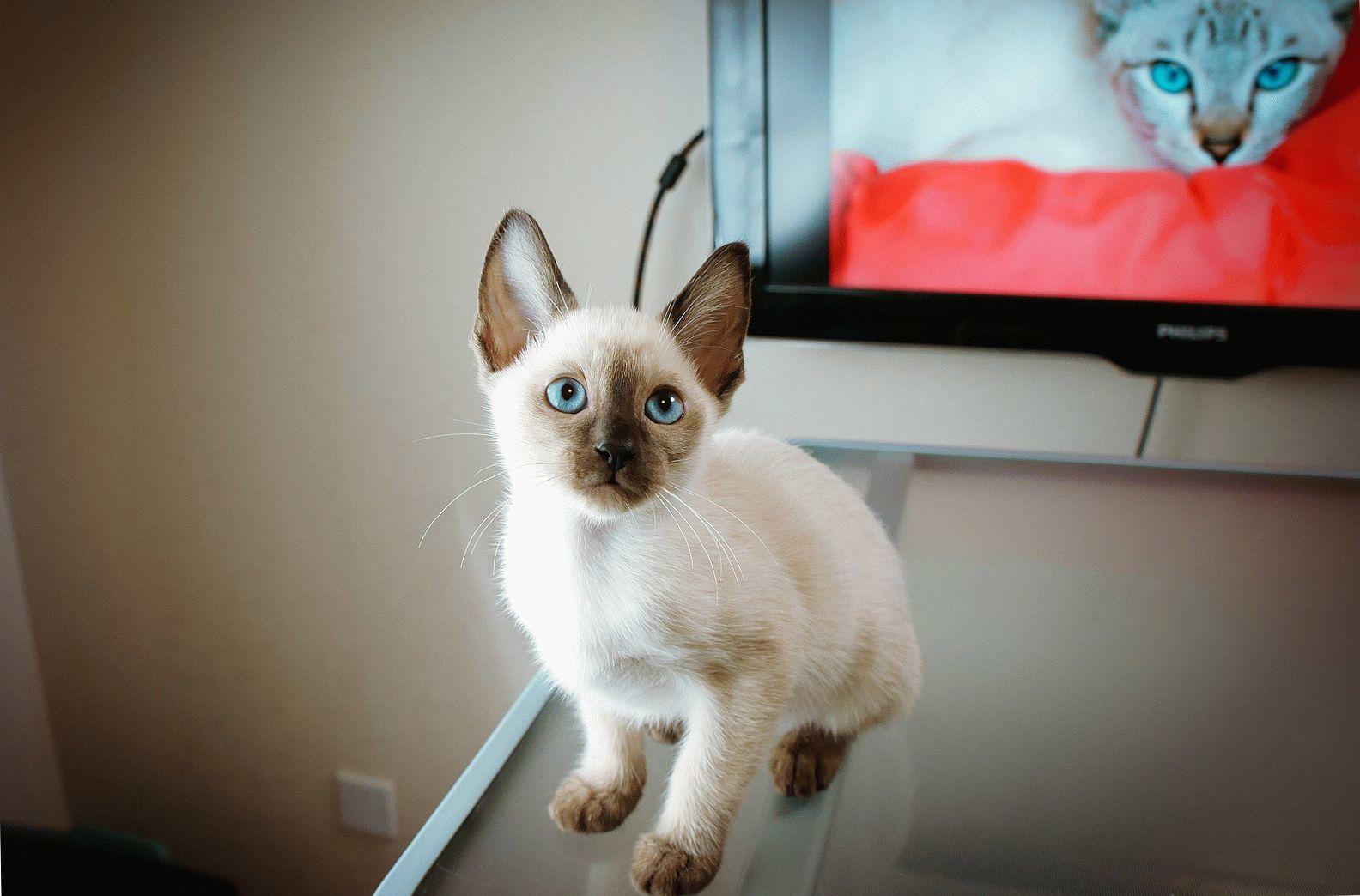 Проблема лишая у кошки