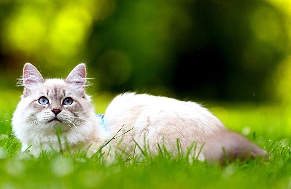 Выгул кошки