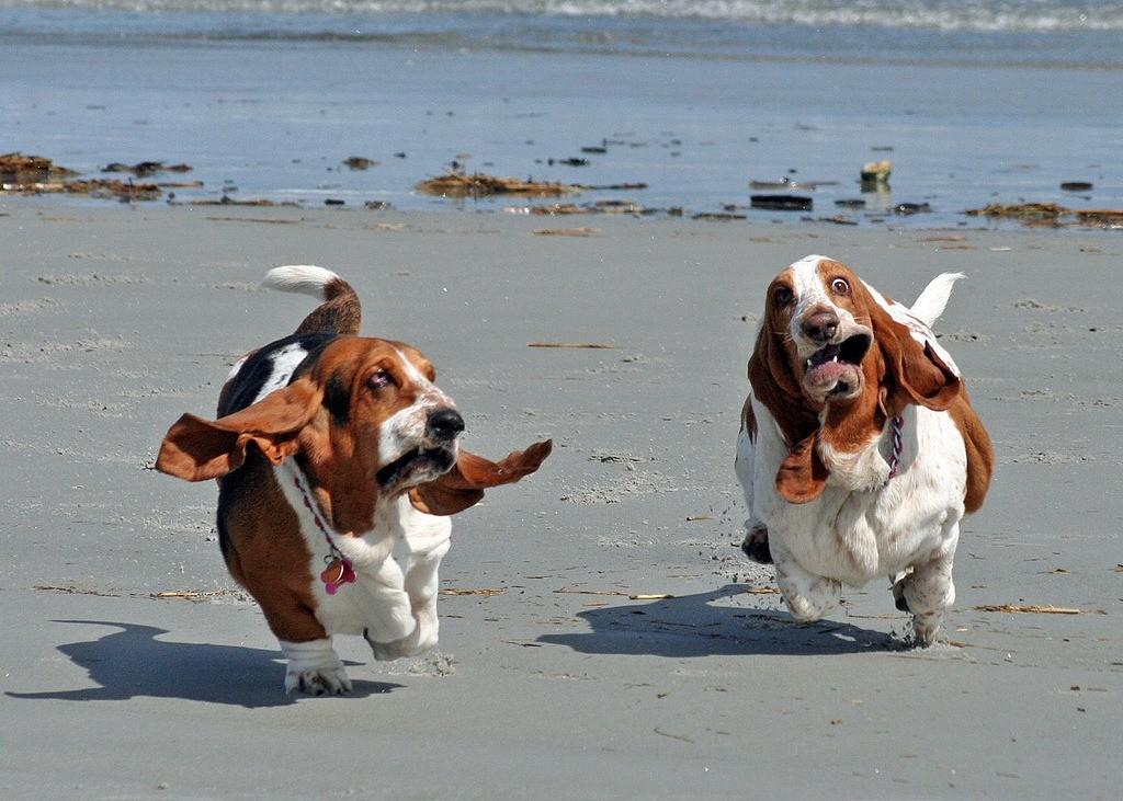 Игривые собаки