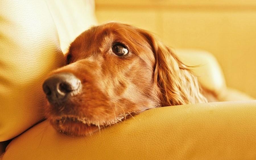 Стерилизация собаки