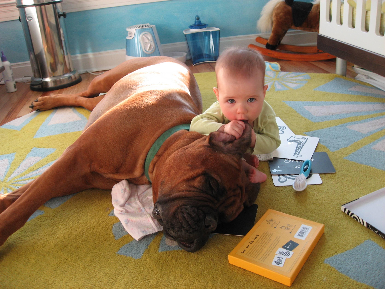 Бульмастиф с ребнком