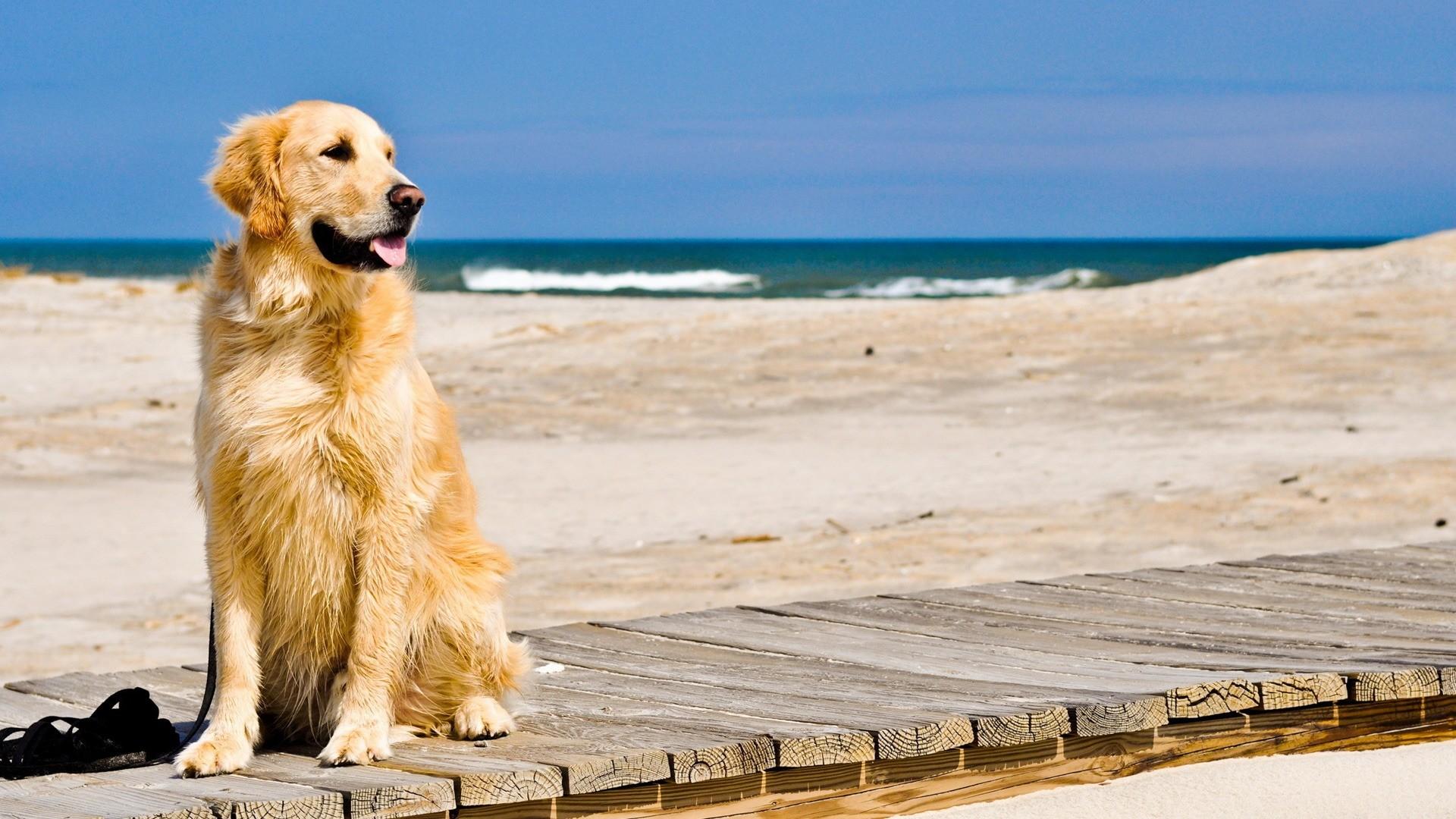 Достоинства собаки