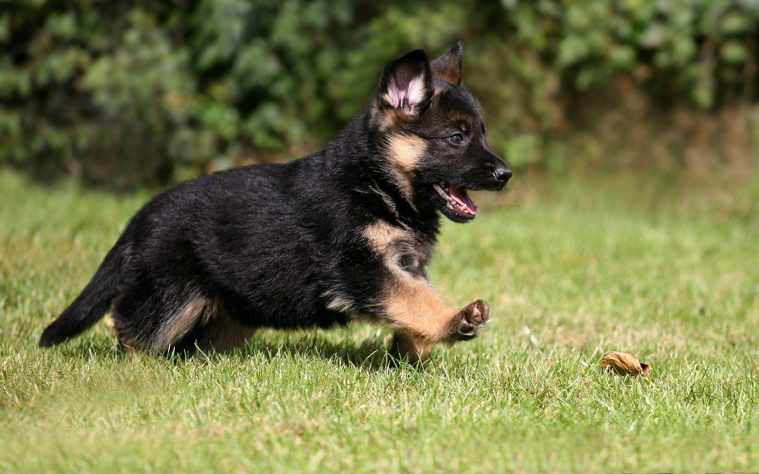 Фото щенка