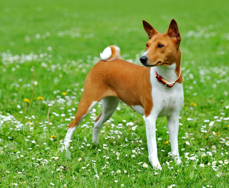 Характер собаки