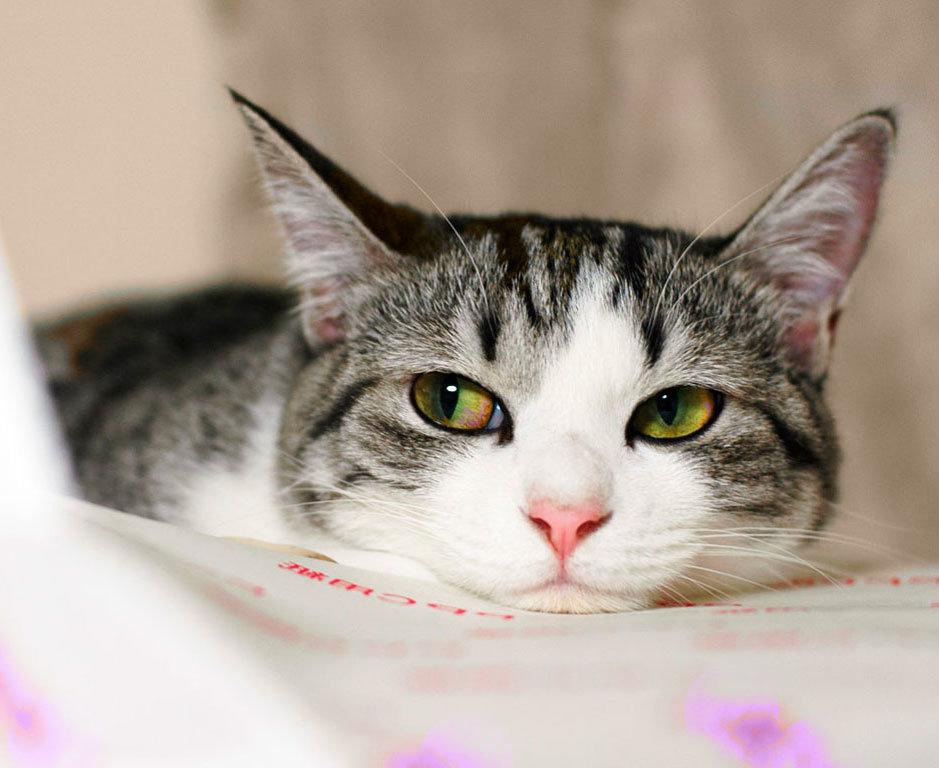 Как и чем лучше усыпить кота или кошку в домашних условиях