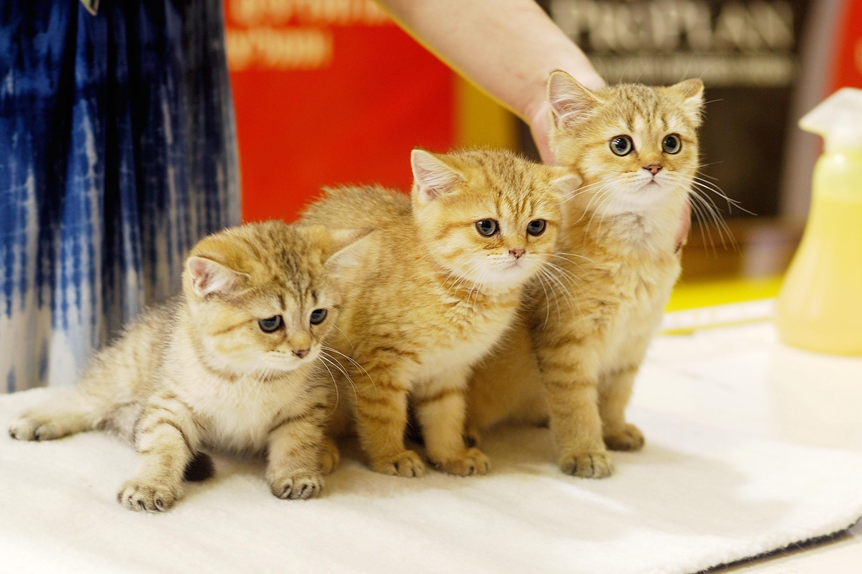 Выставки котов с фото и