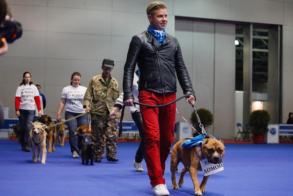 Оценка собаки