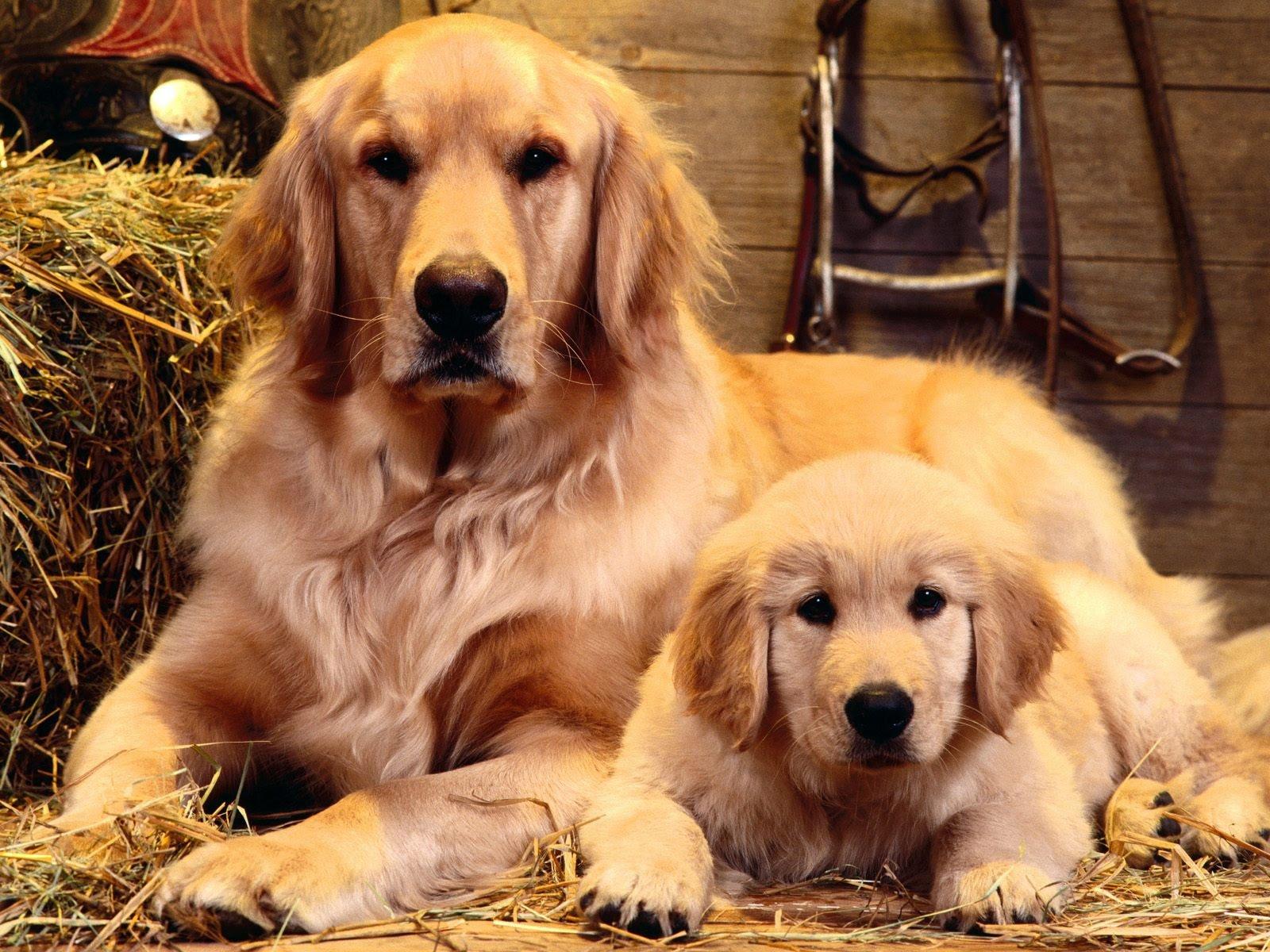 Собака с щенком