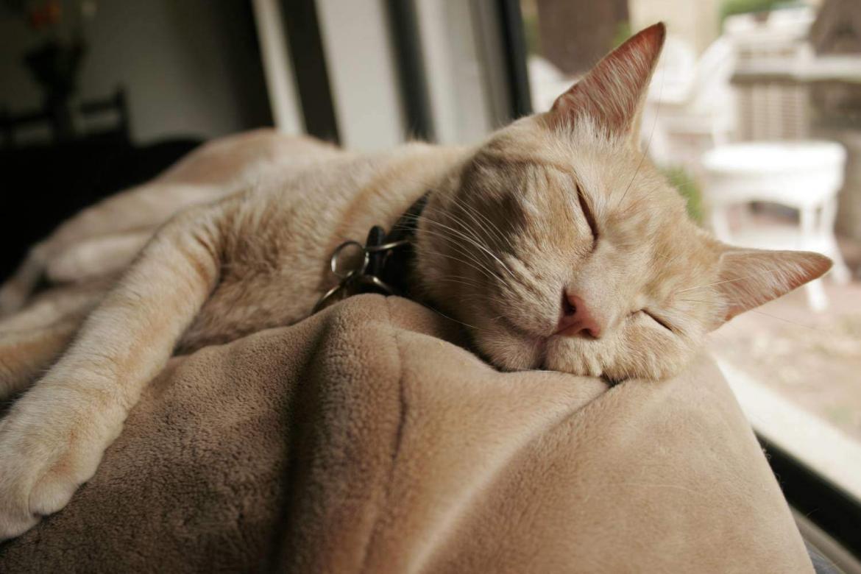 Как усыпить кота в домашних условиях самому лидокаином