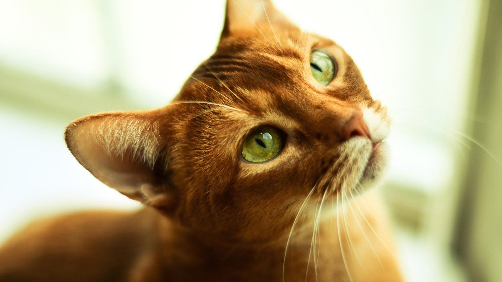 Благоприятное влияние кошки