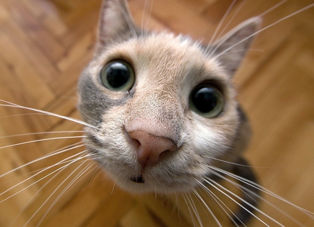 Домашнее лечение кошки