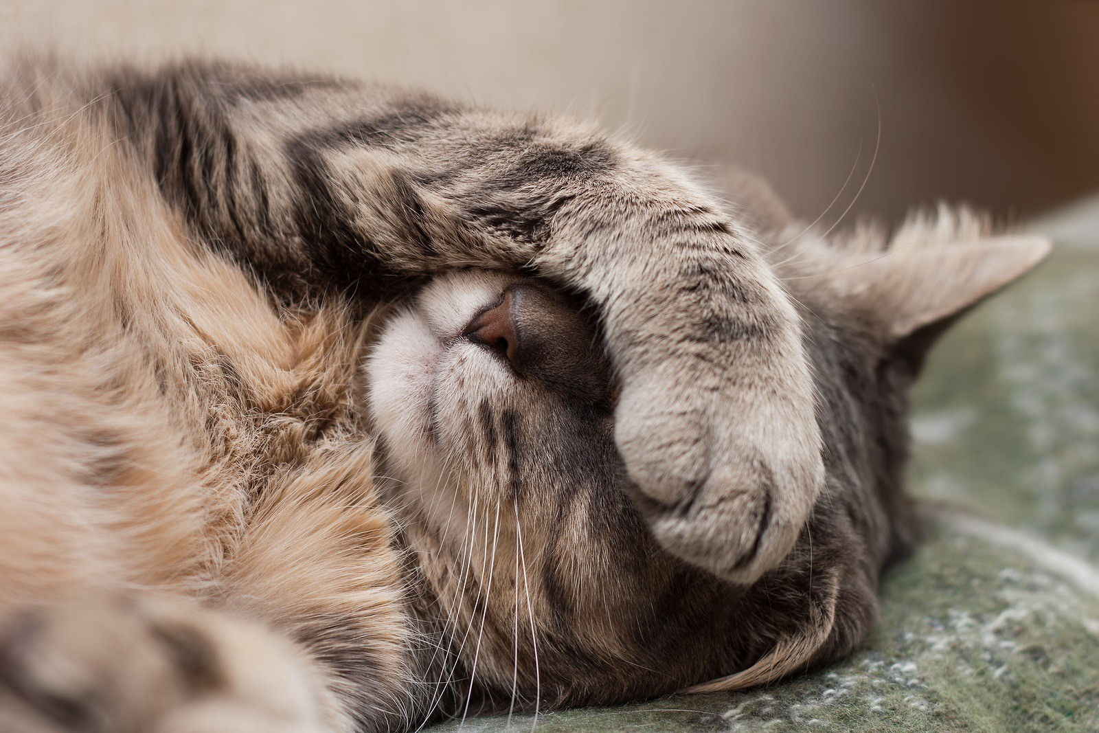 Как лечить понос у кошки
