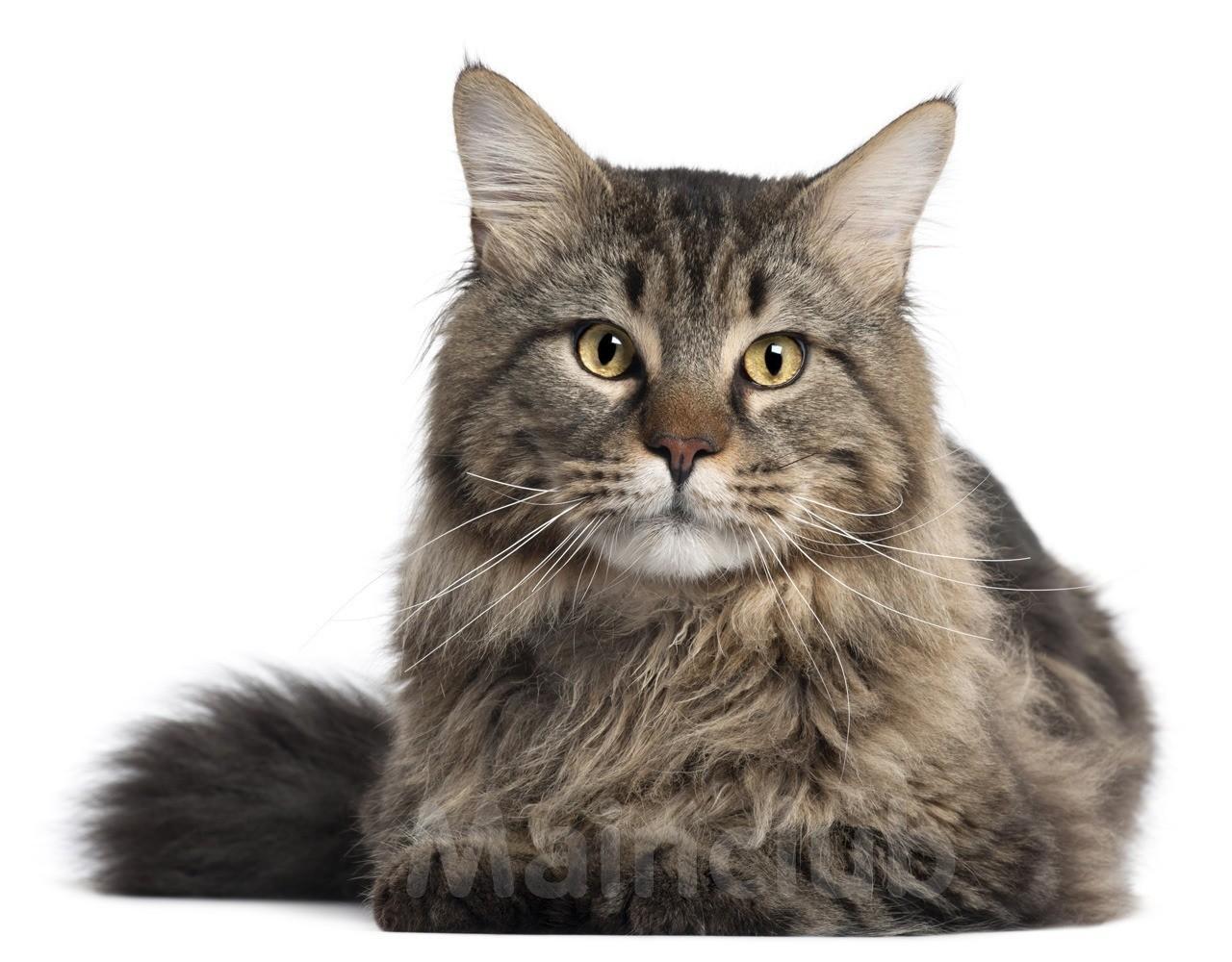 у знакомого глаза как кошки