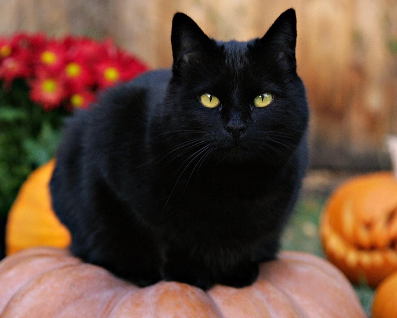 Кошка и нечистая сила