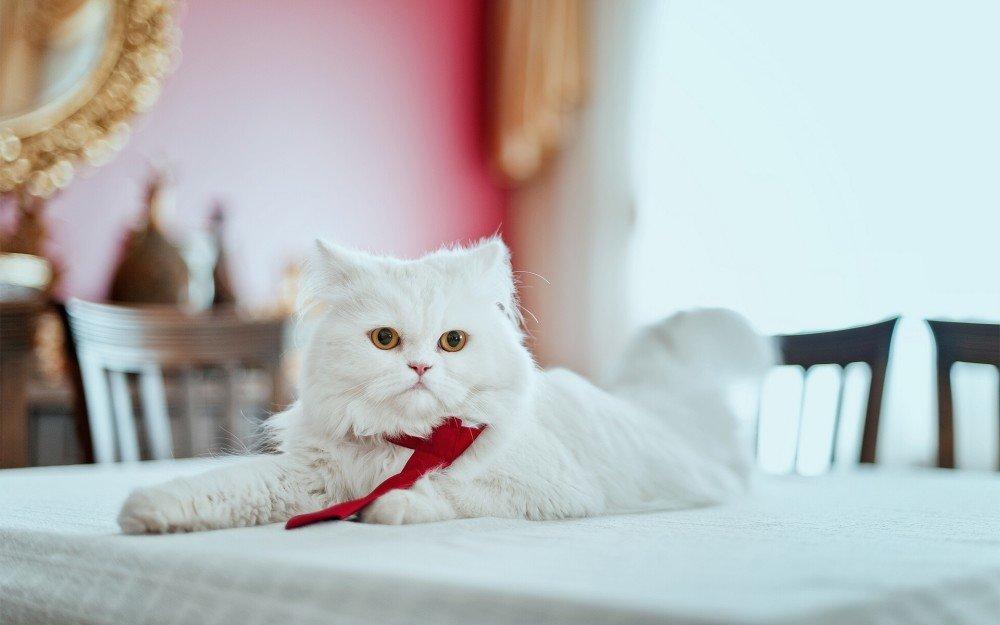 Кошка на столе