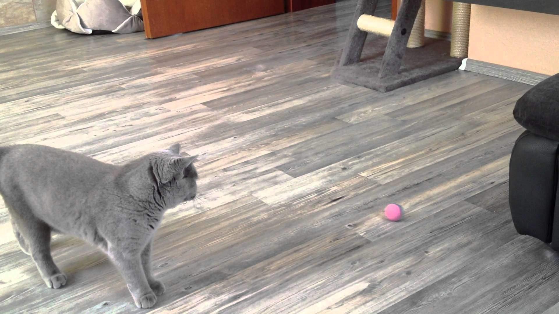 Кошка приносит мячик