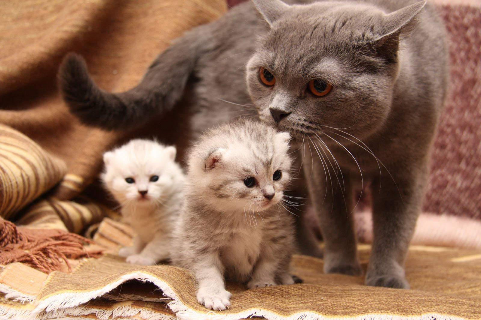 Картинки котят смешные