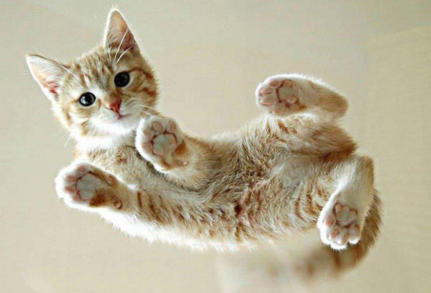 Котёнок на стеклянном столе