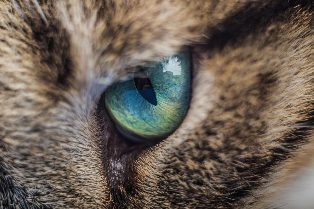 Припухлости в области глаз