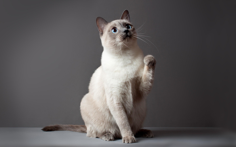 Славный кот