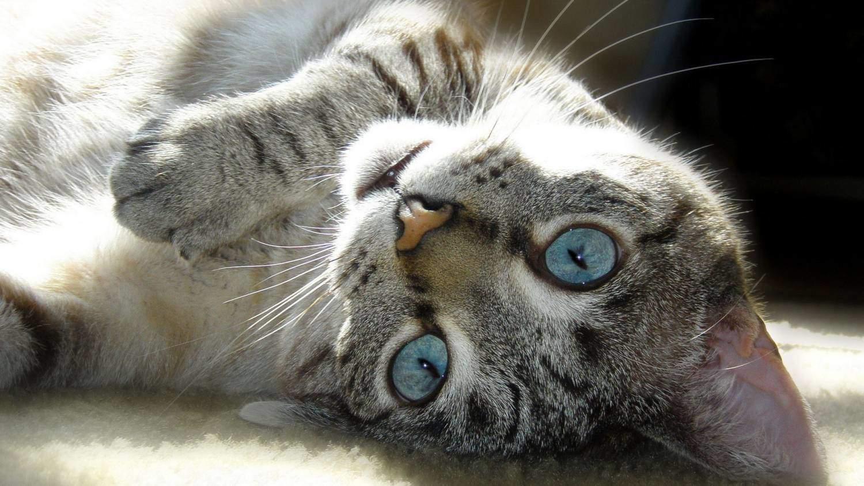 Состояние кошки