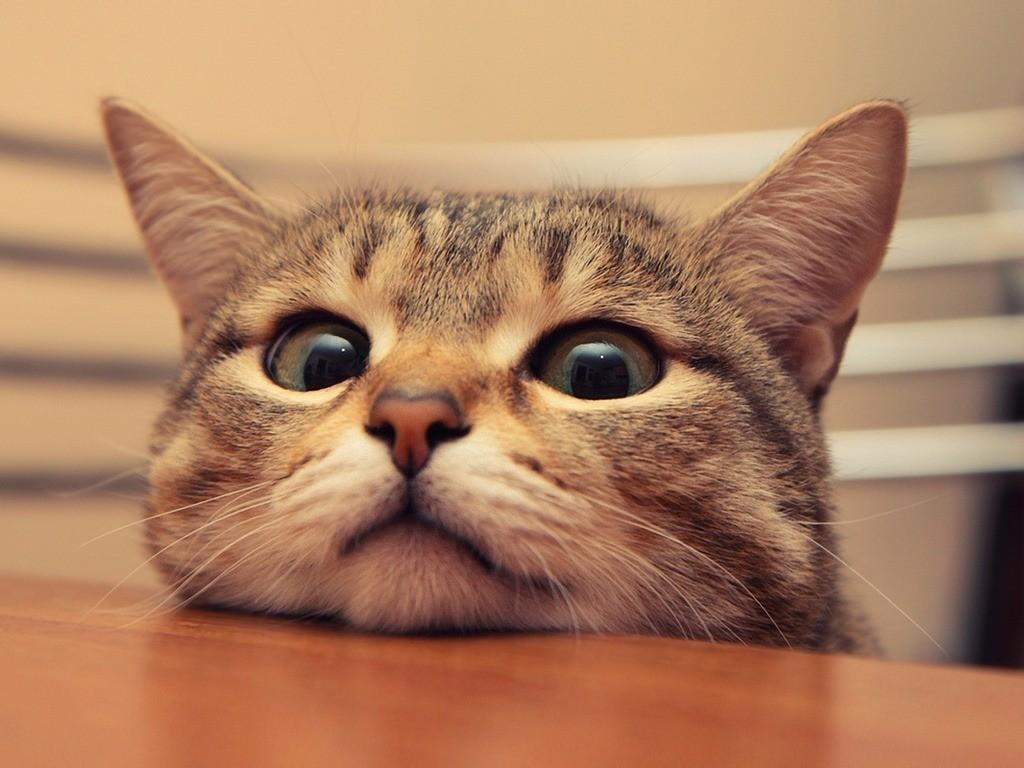 Правильно воспитанная кошка