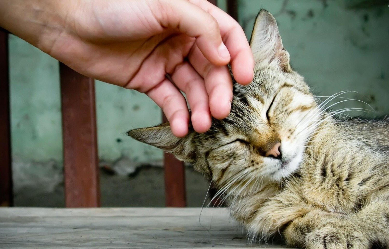 Забота об кошке