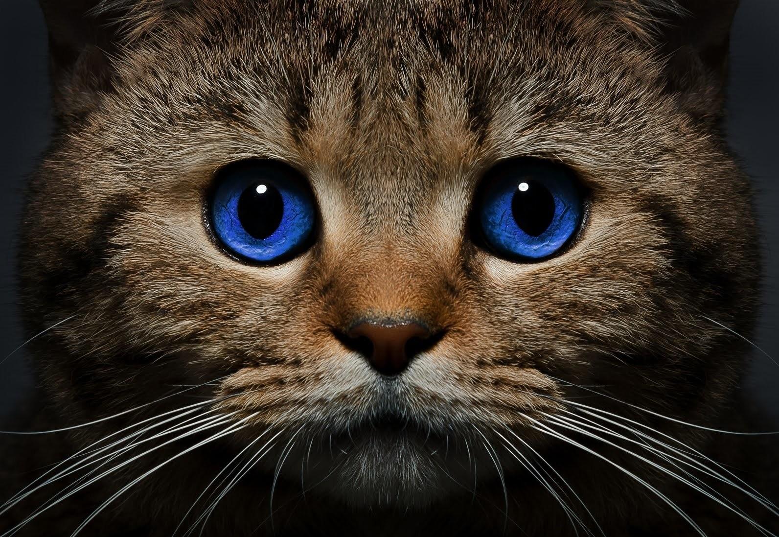 Зрение кошки в темноте