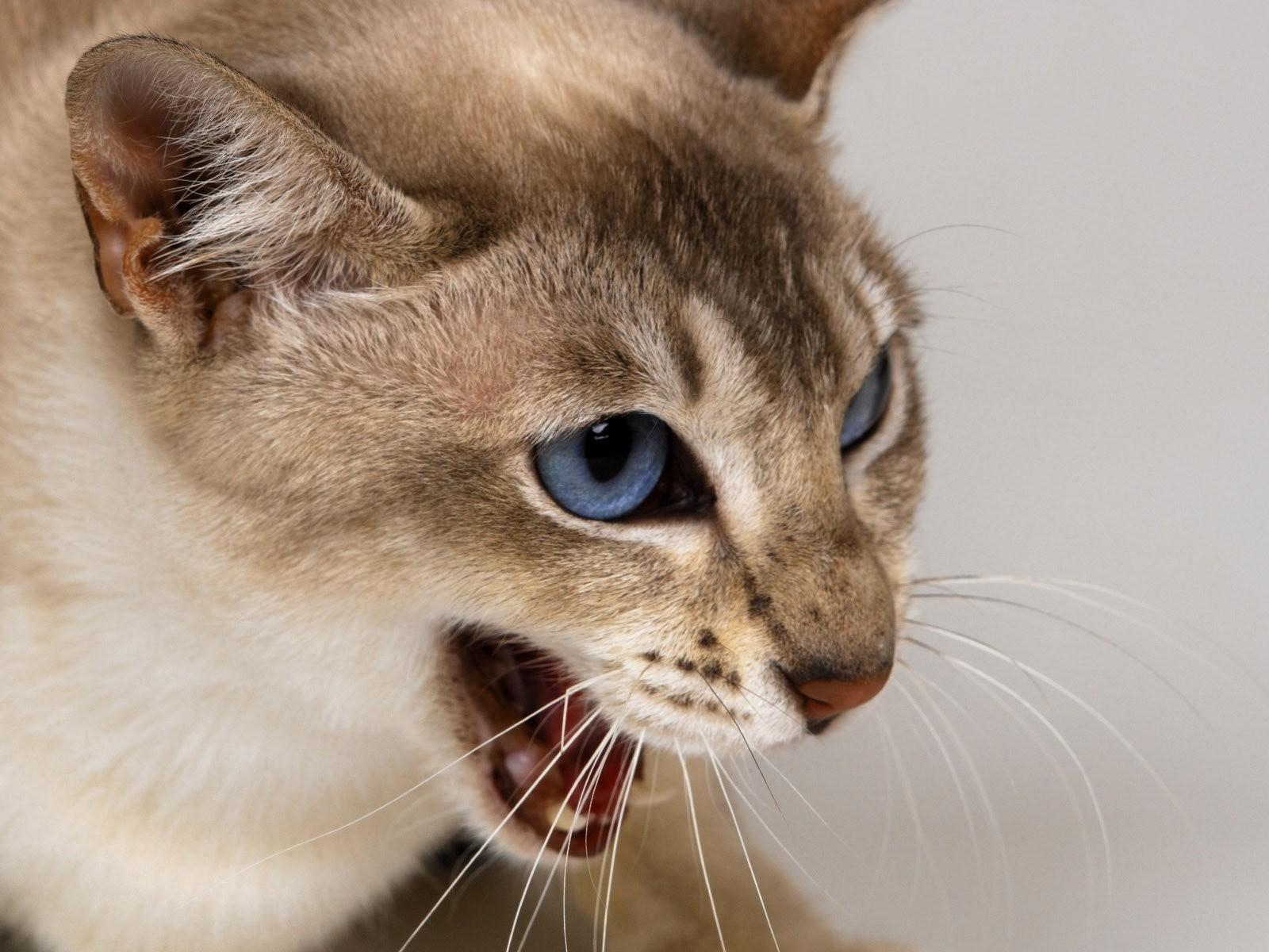Как заражаются бешенством кошки