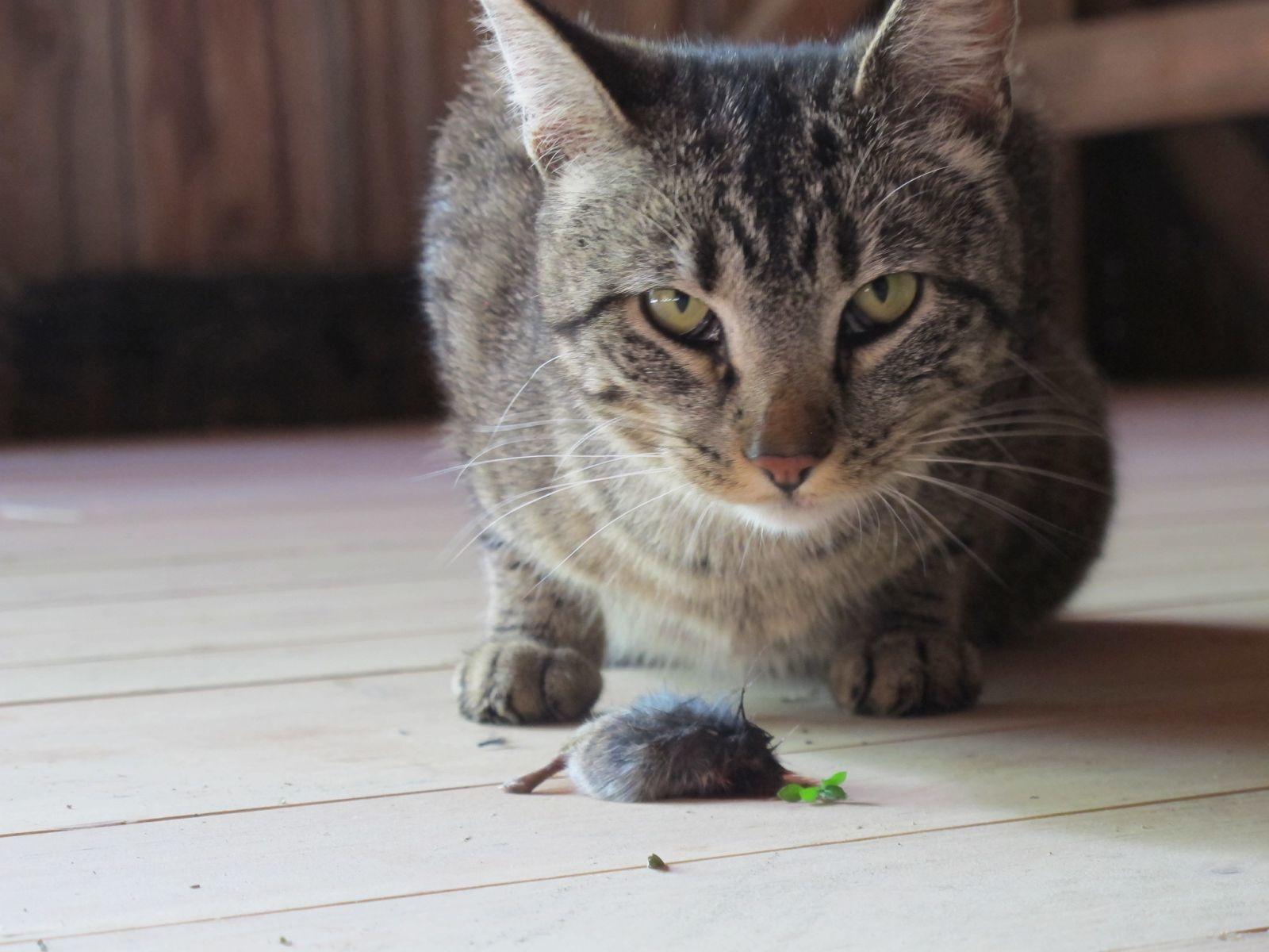 Опасны ли прививки от бешенства котам