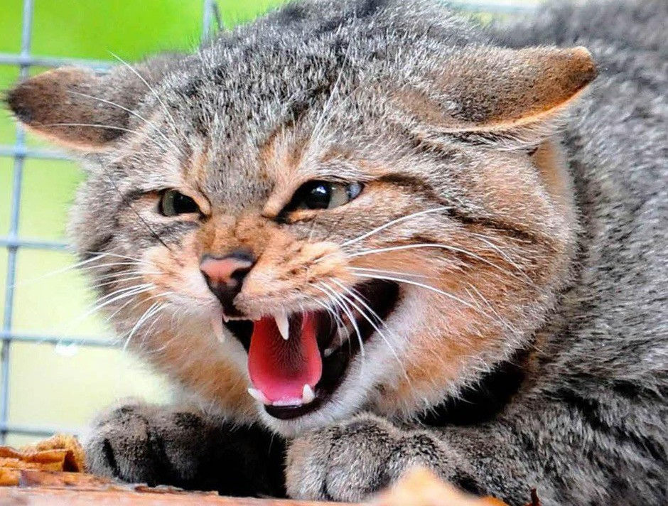 Агрессивное отношение к окружающим - один из симптомов бешенства